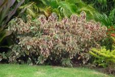 Grenada Villa - Garden area
