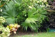 Grenada Villa Rental - Garden area