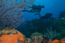 Grenada offers great diving too